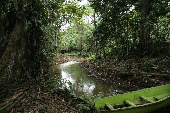 Kasenge Forest Resort Beach: River Kasala running through the forest