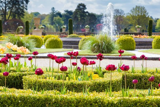 Trentham, UK: Tulips in the Upper Flower Garden