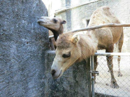 Zoologico de Vallarta: Trying to escape!