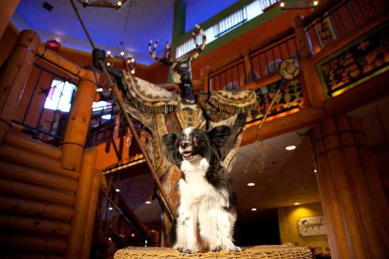 Nativo Lodge Albuquerque: Pet Friendly at Nativo Lodge
