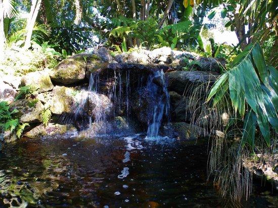 Heathcote Botanical Gardens: Rain Forest Waterfall/bridge
