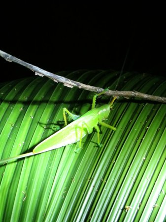 Greentique Costa Rica Tours: Night tour (camouflaged insect)