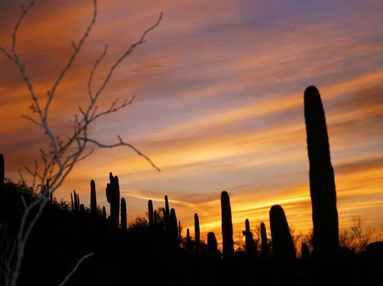Hilton Phoenix Chandler: Sunset at Botanical Gardens - Phoenix