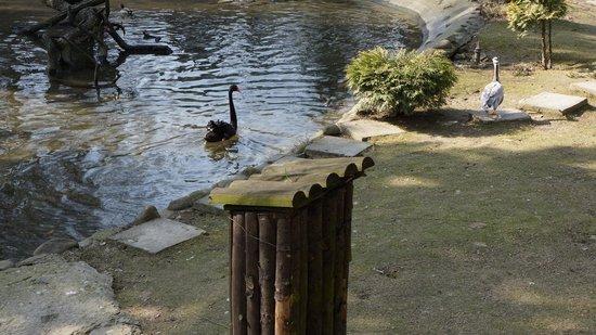 Krakow Zoo (Ogrod Zoologiczny) : Krakow Zoo