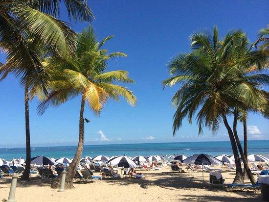 The Ritz-Carlton, San Juan: Paradise!