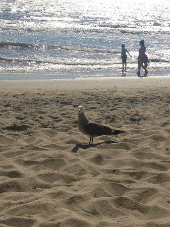 Bel Air Collection Resort & Spa Vallarta: Great beach