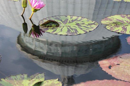 New York Botanical Garden : Reflection on the Lily pond