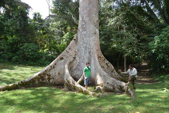 The Lodge at Chaa Creek: Mayan Tree of Life