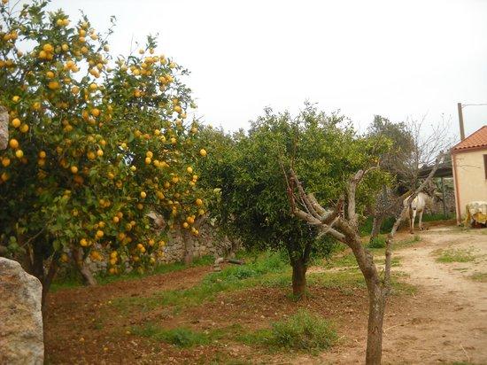Limoneto-Masseria Melcarne-Surbo