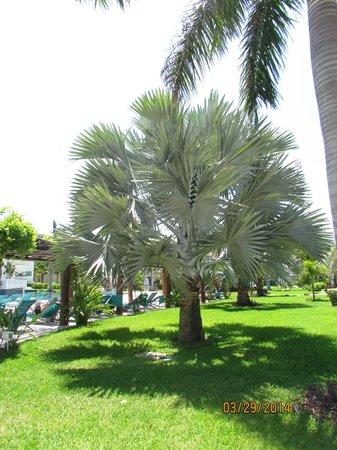 Secrets Silversands Riviera Cancun: Beautiful landscaping