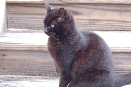 Hampton Inn & Suites Outer Banks / Corolla: Cysco - the feline ambassador of goodwill.