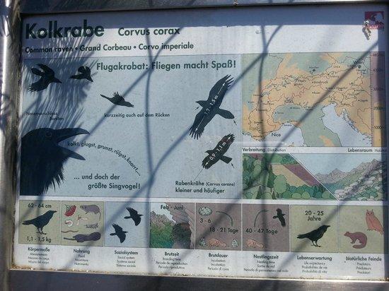 Alpenzoo: познавательный плакат на клетке с вороной