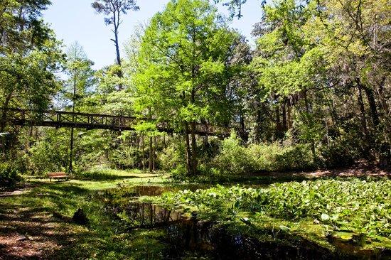 Ravine Gardens State Park: Ravine State Garden