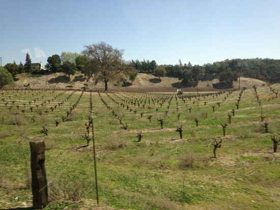 Grapeline Wine Tours, Paso Robles : Vineyards