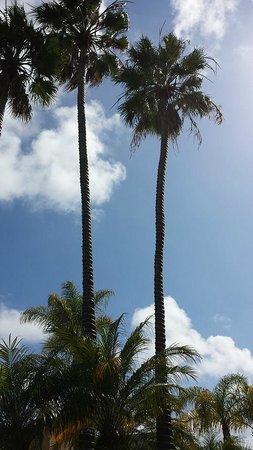 Holiday Inn San Diego-Bayside: Beautiful SoCal day