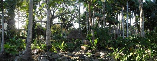 Hotel & Bungalows Mayaland : Außenanlage