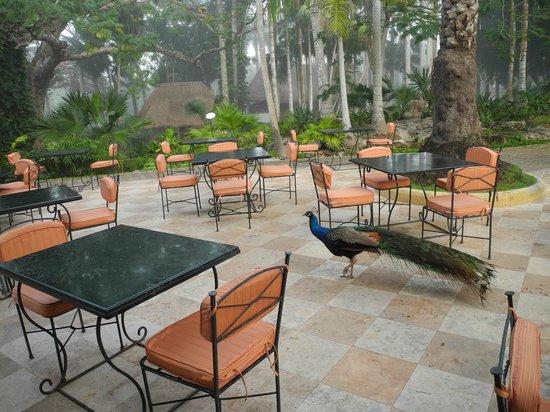 Hotel & Bungalows Mayaland : Frühstücksarea