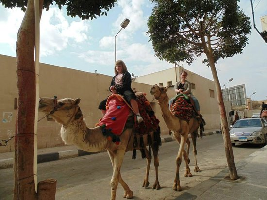 Pyramids View Inn : Camel rides avalible right on the street in front of the Inn