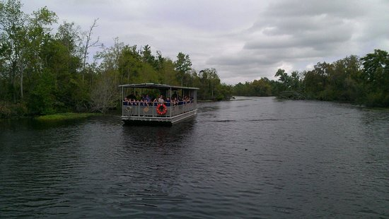 Jean Lafitte Swamp Tours: Pontoon Boat we were on