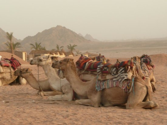 Sharm Solutions Day Tours : Friendly?