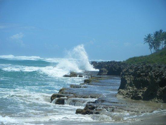 Coconut Palms Resort: Playa Enquentro