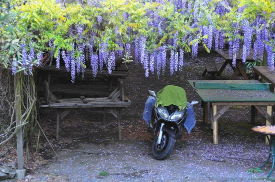 Mountain Home Ranch: Motorcycle and wisteria