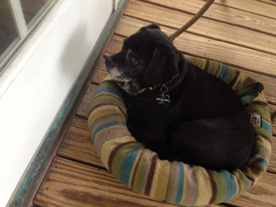 House of the Rising Sun Bed and Breakfast: Puggle bed