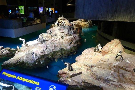 The Sea Horse Picture Of New England Aquarium Boston