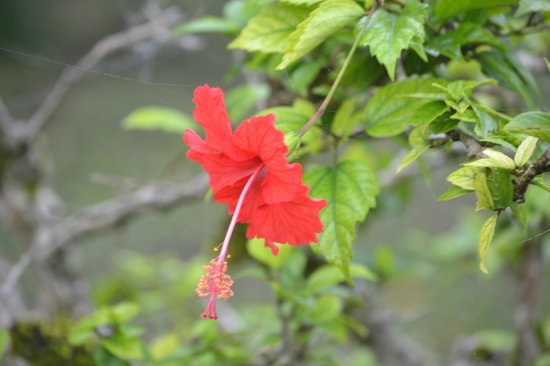 Cahal Pech Village Resort: many tropical flowers on grounds