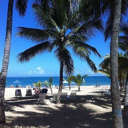 Cabarete Palm Beach Condos: Our Back Yard