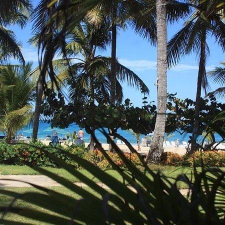 Cabarete Palm Beach Condos: Our Little Jungle