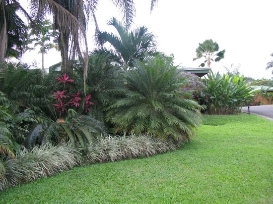Arenal Manoa Hotel: Immaculate grounds