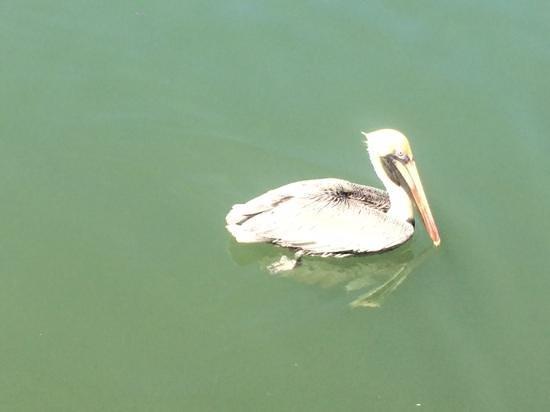 Keys Fisheries : lots of birds around but not pesky