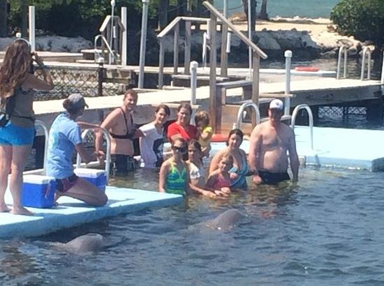 Dolphin Research Center : dolphin dip