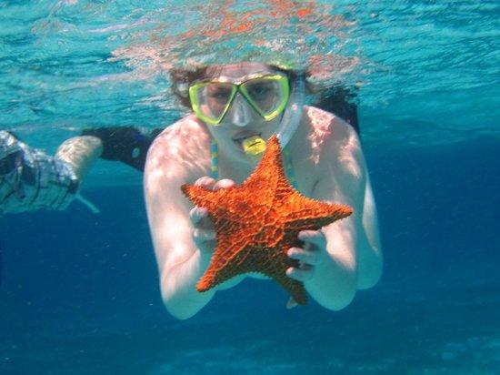 Mystic Snorkel : Snorkeling Fun