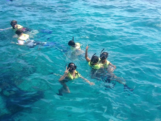 Club Med Turkoise, Turks & Caicos : snorkeling