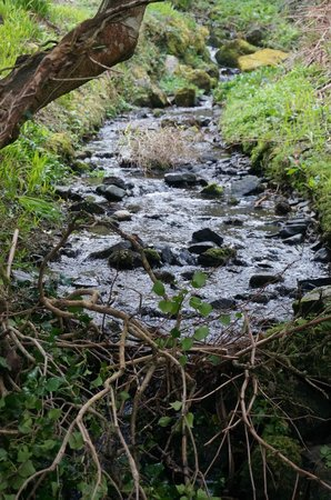 Abbeyglen Castle Hotel: Stream