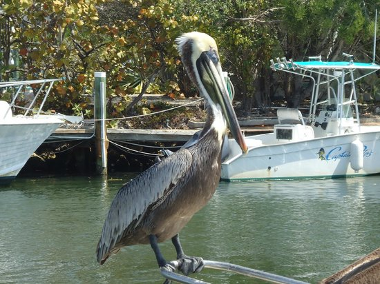 Coconut Cay Resort & Marina: Some of the birds you will see!