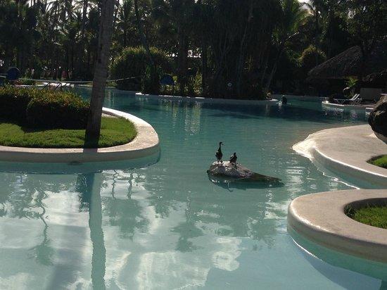Bavaro Princess All Suites Resort, Spa & Casino: Early morning risers having a swim