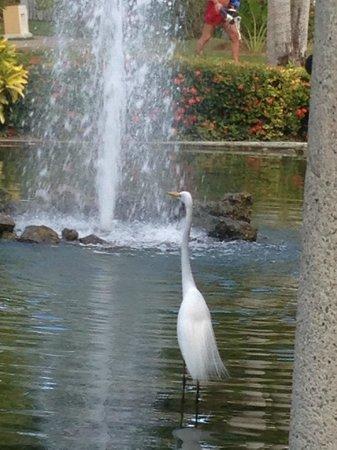 Bavaro Princess All Suites Resort, Spa & Casino: Lots of wildlife on the grounds