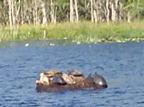 Tidewater Tours: Turtles on river tour