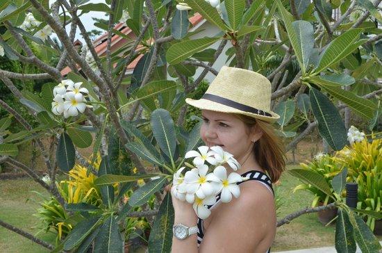 The Old Phuket : эти чудесные деревья с красивыми цветами. они везде
