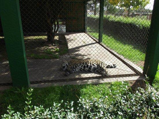 Zoologico de san carlos