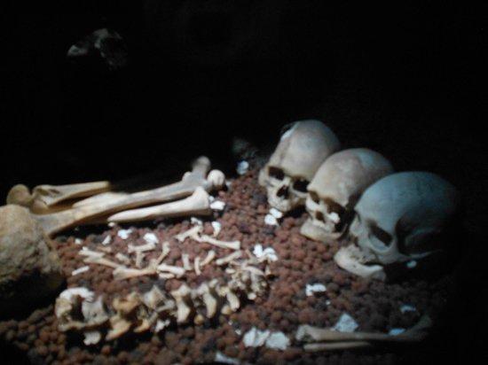 The Kon-Tiki Museum : uns ossinhos...