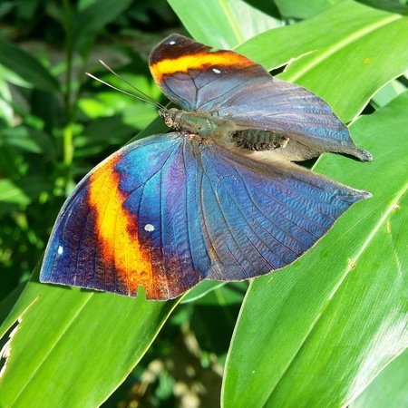 Entopia: Nice color butterfly