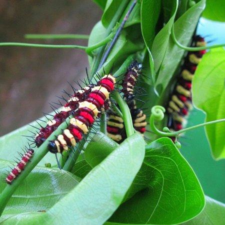 Entopia: Colorful caterpillars