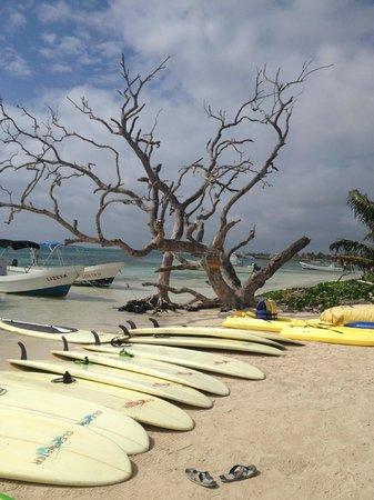 Surfinggreen: view from beach