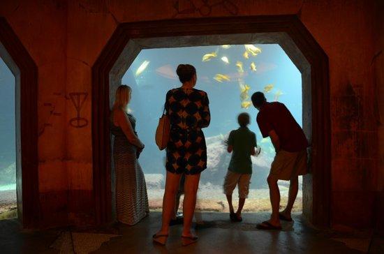 The Reef Atlantis, Autograph Collection: Aquarium view.