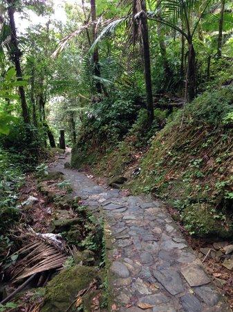 La Mina Falls: Trail down to the falls