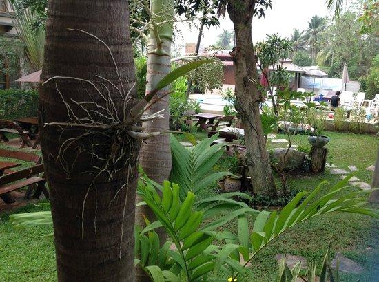 Sabai @ Kan Resort: lush growth